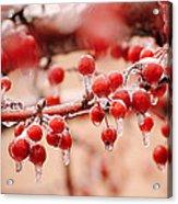 Frozen Berries Acrylic Print