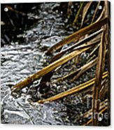 Frozen Edges And Ends Acrylic Print