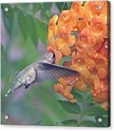 Frozen Hummingbird Acrylic Print