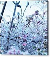 Frozen In Ice Nature Acrylic Print