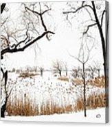 Frozen Marshland IIi Acrylic Print