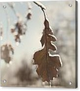 Frozen Oak Leaf Abstract Nature Detail Acrylic Print