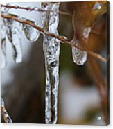 Frozen Purity Acrylic Print by Hannah Miller