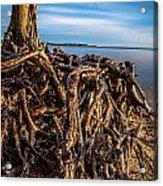 Frozen Roots Acrylic Print