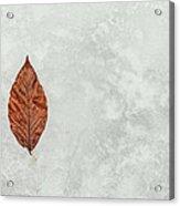 Frozen Seasons Acrylic Print