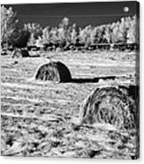 frozen snow covered hay bales in a field Forget Saskatchewan Canada Acrylic Print