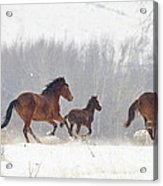 Frozen Track Acrylic Print by Mike  Dawson