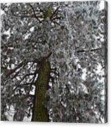 Frozen Tree 2 Acrylic Print