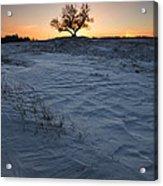 Frozen Tree Of Wisdom Acrylic Print