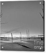 Frozen Trees Bw Acrylic Print