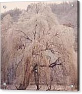 Frozen Willow Acrylic Print