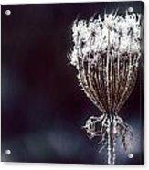 Frozen Wisps Acrylic Print