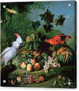 Fruit And Birds Acrylic Print