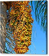 Fruit Of The Queen Palm Acrylic Print