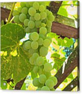 Fruit Of The Vine - Garden Art For The Kitchen Acrylic Print