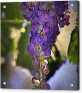 Fruit Of The Vine Acrylic Print by Donna Kennedy
