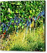 Fruit Of The Vine Acrylic Print by Kay Gilley