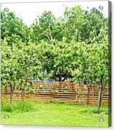 Fruit Trees Acrylic Print