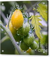 Fruits Of Our Labours Acrylic Print