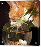 Frustrated Feline Acrylic Print