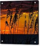 Ft. Myers Sea Oats Acrylic Print