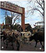Ft Worth Trail Ride At Ft Worth Stockyard Acrylic Print