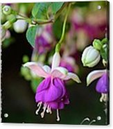 Fuchsia Birthday Card Acrylic Print