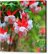 Fuchsia Blooms With Scripture Acrylic Print
