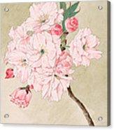 Fukurokuju - God Of Longevity - Vintage Watercolor Acrylic Print