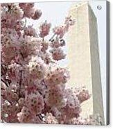 Full Bloom In Dc Acrylic Print