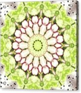 Full Frame Shot Of Radish And Cucumber Acrylic Print