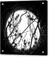 Full Moon And Poplar Branches Acrylic Print