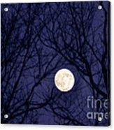 Full Moon Bare Branches Acrylic Print