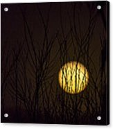 Full Moon Behind The Trees Acrylic Print