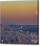 Full Moon Gathering Of Capricorn Acrylic Print