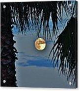 Full Moon Palm Tree 5 9/17 Acrylic Print
