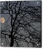 Full Moon Through A Tree Still Standing After A Fire Acrylic Print