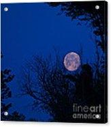 Full Moon With Trees Acrylic Print