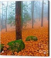 Full Of Autumn Acrylic Print