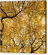 Full Yellow Acrylic Print