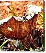 Fun Fungus Acrylic Print