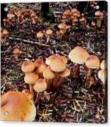 Fungi Forest Acrylic Print by Steven Valkenberg