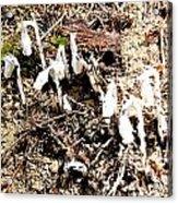 Fungi Fronds Acrylic Print