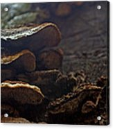 Fungus 11 Acrylic Print