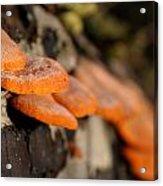 Fungus 2 Acrylic Print
