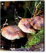 Fungus Among Us II Acrylic Print