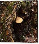 Fungus In Stump Hole Acrylic Print