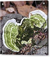 Fungus Number One Acrylic Print