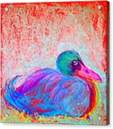 Funky Duck In Snowfall Acrylic Print