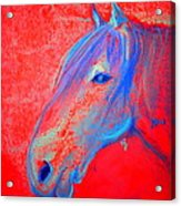 Funky Handsome Horse Blue Acrylic Print